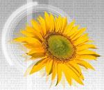Evolutie remarcabila a companiei EBS Romania in primele 9 luni ale anului 2008