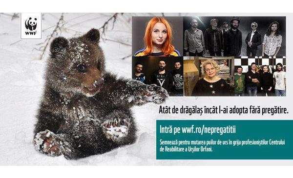 Singurul orfelinat pentru puii de urs din Europa, aflat în România, are nevoie de ajutor