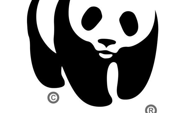 Ziua Internațională a Vieții Sălbatice 2018: Noi pericole la adresa felinelor mari