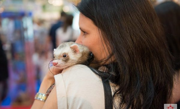 Un weekend cu familia în lumea animalului de companie