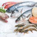 Produse peste, Alfredo Seafood