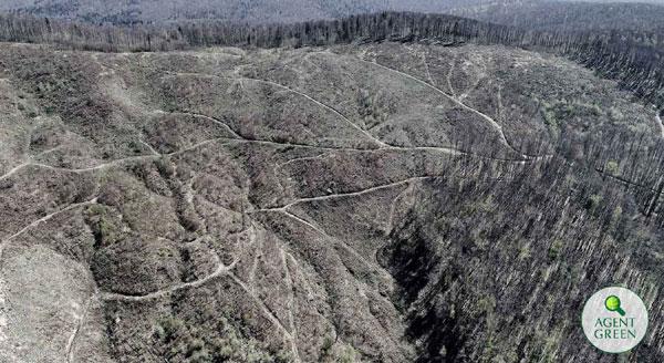 Lege Pentru Interzicerea Exploatărilor Forestiere în Parcurile Naționale