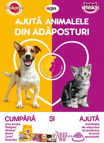 Ajuta animalele din adaposturi