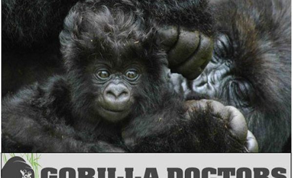 LIA in partnership with Gorilla Doctors announced a global competition for young creative talent.