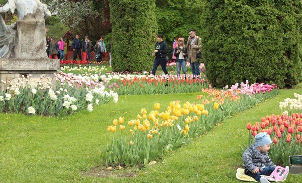 De Ziua Internațională a Cărții, toți cei care vor avea la ei o carte pot intra gratuit la grădinile botanice din Jibou și Cluj