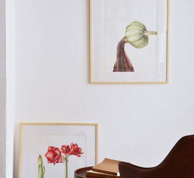 Zeci de lucrări de ilustrație botanică semnate de artista Irina Neacșu pot fi vizitate la Brașov, într-un atelier de poveste