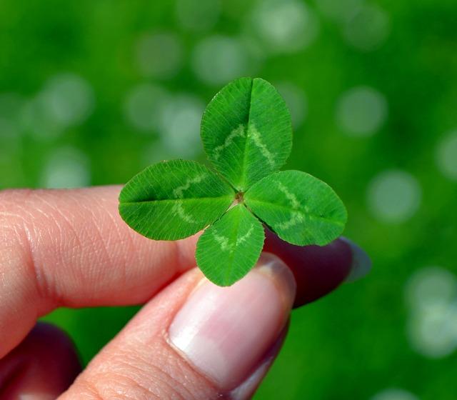 trifoi cu 4 foi - 10 credințe și superstiții care aduc noroc
