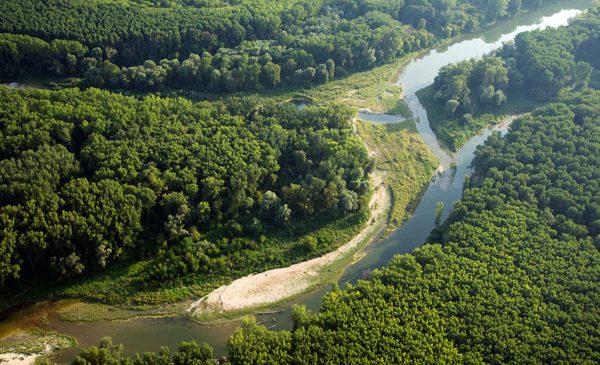 Zece țări europene își unesc forțele pentru protejarea peștilor migratori din Dunăre