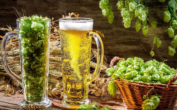 Polifenolii din bere pot contribui la echilibrul florei intestinale