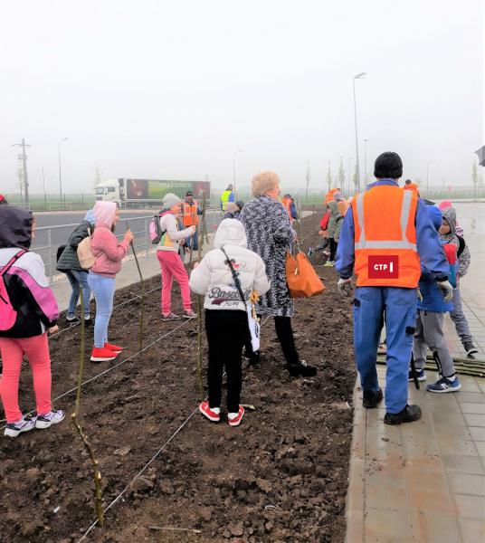 plantare salcii in parcul industrial CTPark Bucharest West