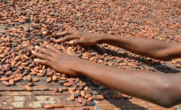 Mondelēz International se angajează să asigure 100% din volumul de cacao pentru toate brandurile de ciocolată, prin programul său de sustenabilitate Cocoa Life până în 2025