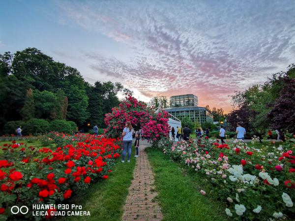 Grădina Botanică Fotografie realizată de Dan Mihai Bălănescu în cadrul workshopului  Huawei #LightUptheNight