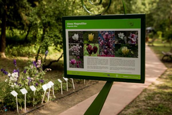 Inaugurare Aleea Magnoliilor
