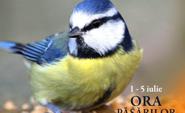 Ora Păsărilor
