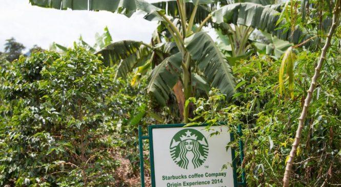 Descoperiți modul sustenabil în care se prepară cafeaua voastră de dimineață