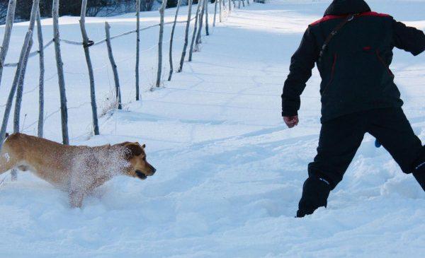 """Lansarea proiectului """"Câini salvatori"""""""