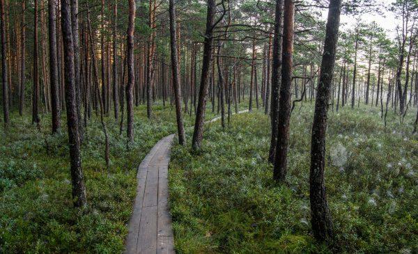 Bolt anunță inițiativa Green Plan, pentru a-și reduce amprenta de dioxid de carbon în Europa
