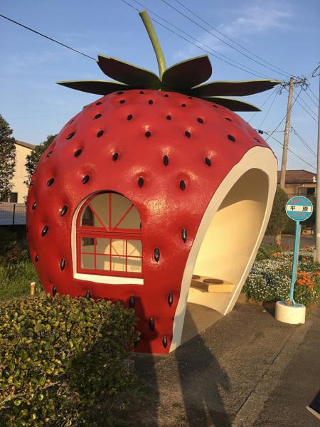 Erdbeere in Japan (c) Shutterstock