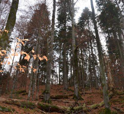 Protejarea naturii din comuna Băiuț poate îmbunătăți nivelul de trai al localnicilor