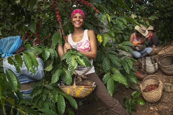 culegatoare de cafea Cuba