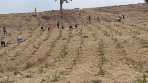 Dedeman – 5 ani de susținere a acțiunilor de împădurire cu voluntari