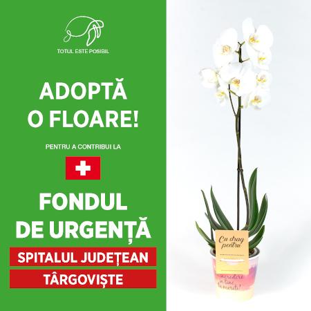ADOPTĂ O FLOARE Targoviste