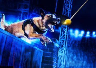 """HISTORY® transmite în exclusivitate serialul-concurs """"Câini Polițiști de Top"""""""
