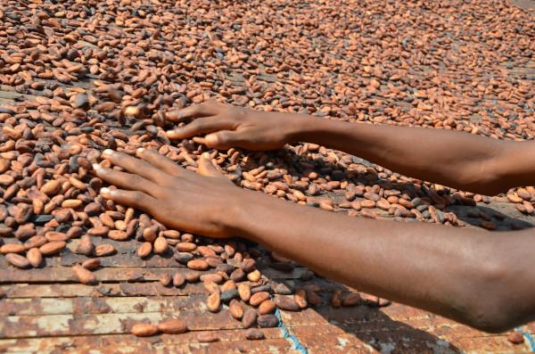 Programul Cocoa Life