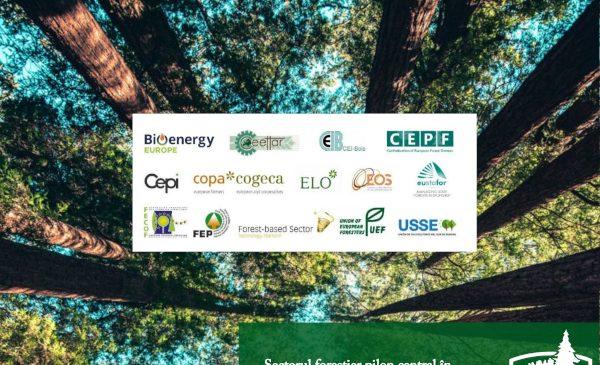 Sectorul forestier pilon central în asigurarea protejării mediului și a gestionării durabile a pădurii