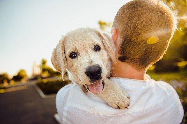 Probiotice pentru câini: când fac bine și când fac rău