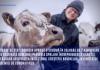 Ajutoare de stat: Comisia aprobă o schemă în valoare de 7,4 milioane de euro destinată României pentru a sprijini întreprinderile care își desfășoară activitatea în sectorul creșterii bovinelor, în contextul pandemiei de coronavirus