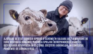 Ajutor de stat pentru întreprinderile care își desfășoară activitatea în sectorul creșterii bovinelor