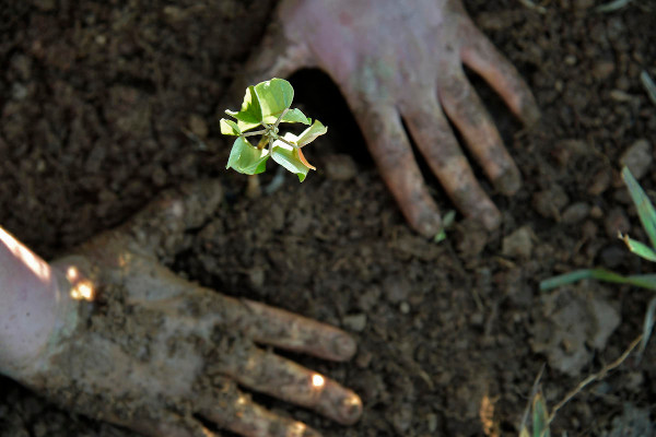 Bela Vista Farm, Owner: Marcio de Oliveira Santos, Socorro, São Paulo, Brazil. Foto © Adriano Gambarini/WWF-US