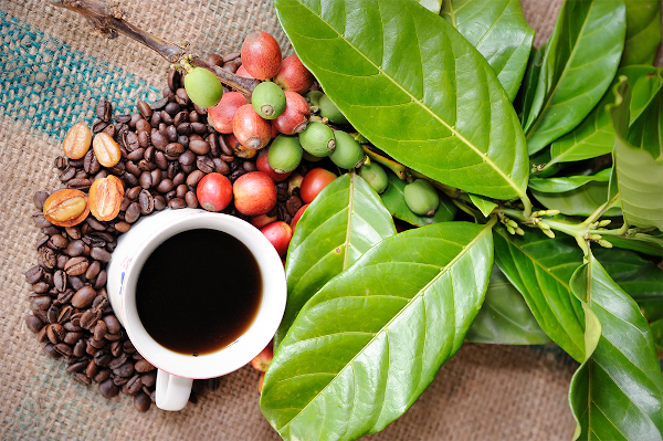 7 lucruri despre cafea