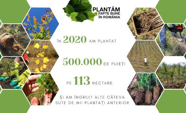 În 2020 am plantat jumătate de milion de puieți – povestea merge mai departe