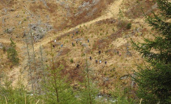 Conservation Carpathia: 100 hectare de pădure tăiate la ras, din Munții Făgăraș, vor fi reconstruite prin plantarea a 350.000 de puieți