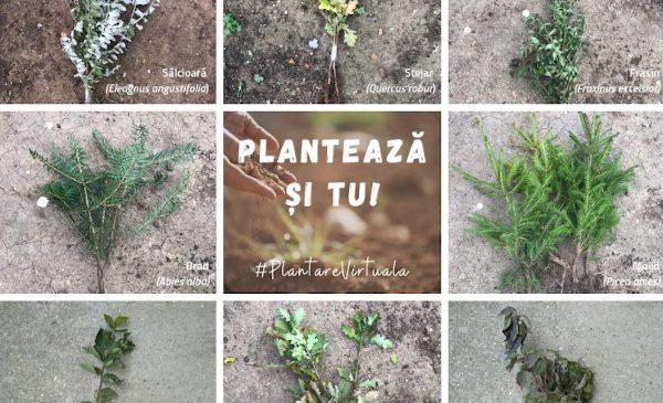 """""""Adoptă un copac!"""" lansează ediția de primavară a campaniei """"Plantare Virtuală – Plantăm speranță la distanță"""""""