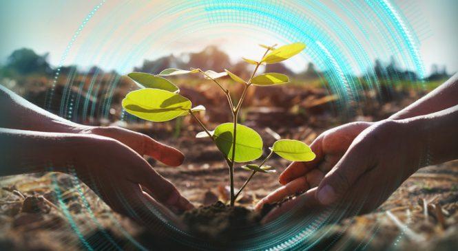 """OMV Petrom contribuie cu 1,5 milioane de euro, pentru al doilea an, la cea mai mare campanie de împădurire cu finanțare privată – """"România plantează pentru mâine"""""""