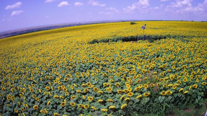 vodafone solutii digitale agricultura
