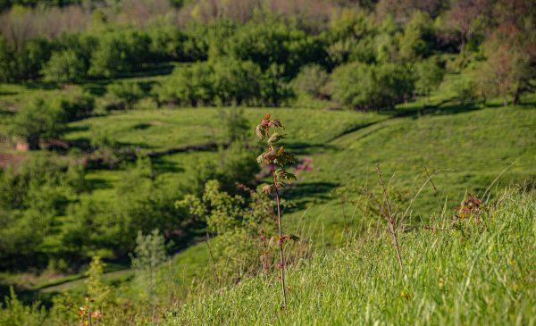 Plantăm fapte bune în România crește suprafața împădurită a țării