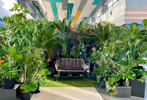 Jungla urbană Sun Plaza Flower Expo