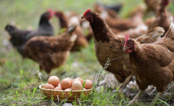 OgradaVerde.ro: afaceri de 300.000 de euro din hrană sănătoasă de la țară in 2020