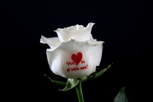 FlorideLux_Trandafiri care vorbesc