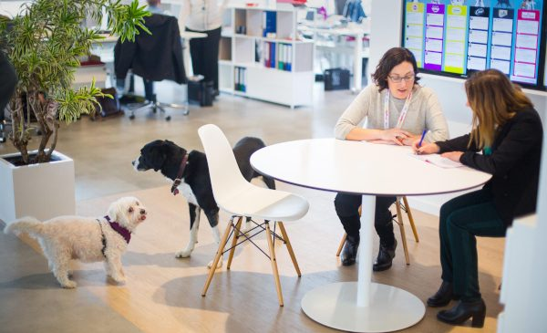 Birourile primitoare cu animalele de companie vor susține tranziția oamenilor la serviciu în noul context pandemic