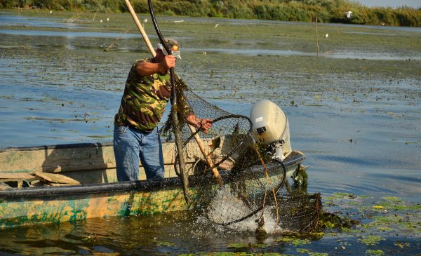 Securitatea alimentară mondială este în pericol dacă nu avem mai multă grijă de râuri