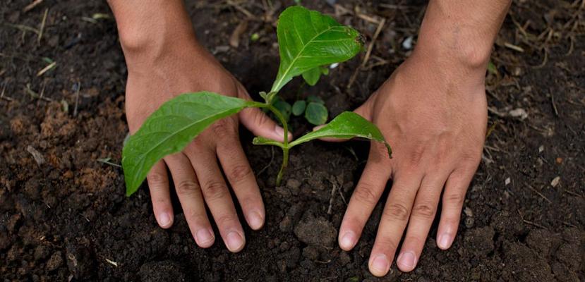 planurile Nestlé pentru trecerea la sistemul alimentar regenerativ